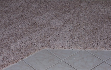 Carpet Transition Carpet Edge Carpet To Carpet Transition New